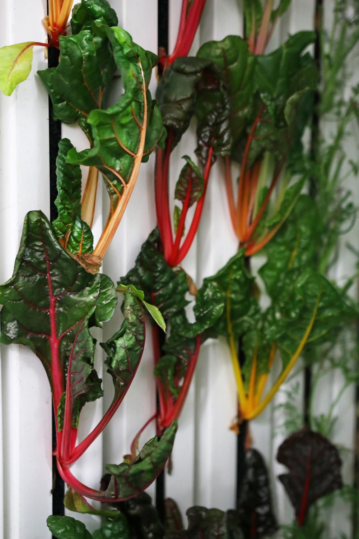Cómo cultivar cuatro toneladas de verduras al año en plena ciudad